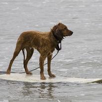 Tutti in spiaggia a surfare!