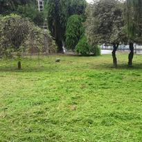 Sistemazione del verde al Palacima